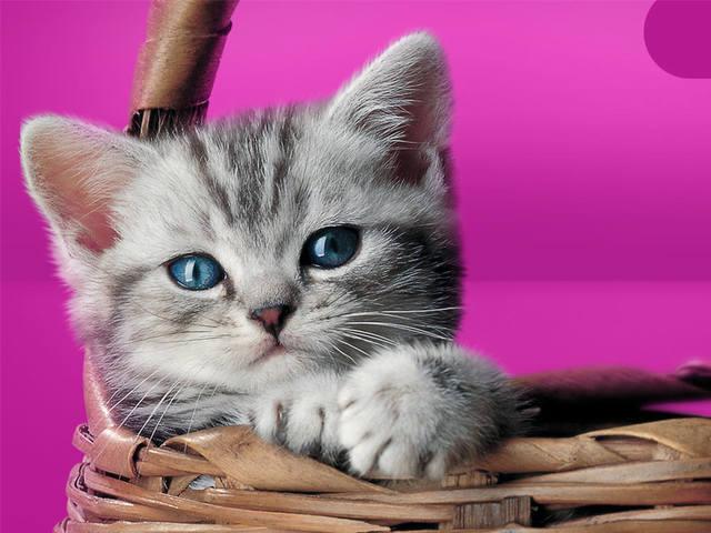 Кошки (Cats) - Page 5 11522963_m