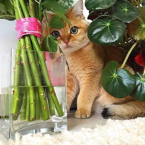 Кошки (Cats) - Page 6 12098005_m