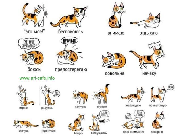 Кошки (Cats) - Page 5 12098175_m