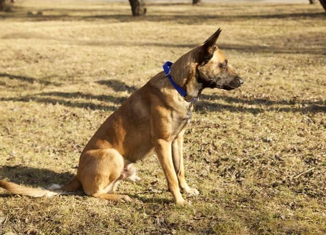 Амуниция Frei Wind для дрессировки и содержания собак от производителя, вязаная одежда для собак  12209417_m
