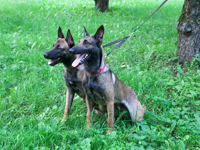 Амуниция Frei Wind для дрессировки и содержания собак от производителя, вязаная одежда для собак  12287507_m