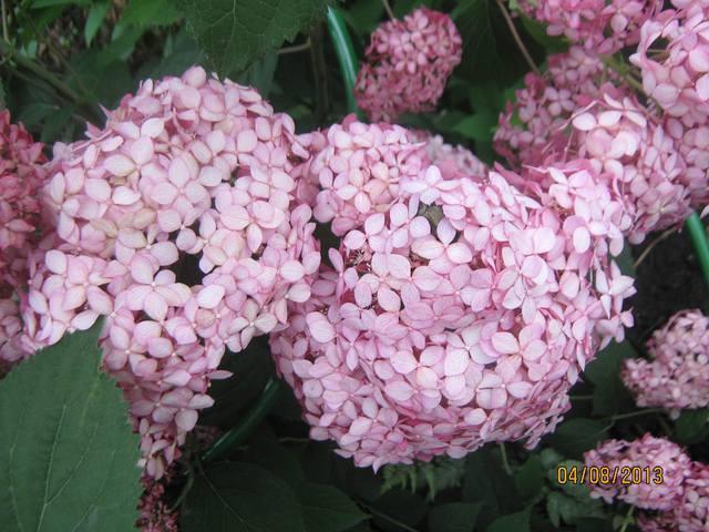 Весна идет весне дорогу 12606691_m