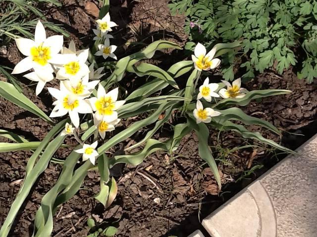 Весна идет весне дорогу - Страница 15 12745287_m
