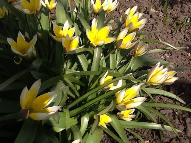 Весна идет весне дорогу - Страница 15 12745314_m