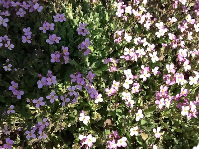 Весна идет весне дорогу - Страница 15 12745404_m