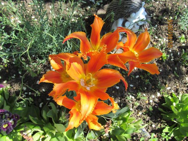 Тюльпаны - Страница 8 12923395_m