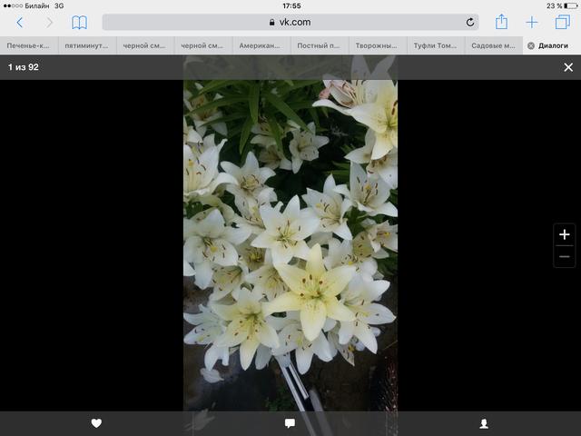 Садовые многолетние цветы - давайте меняться - Страница 6 13434402_m