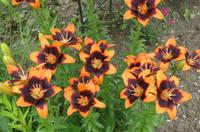 Лилии от Валентины - Страница 2 13450110_s