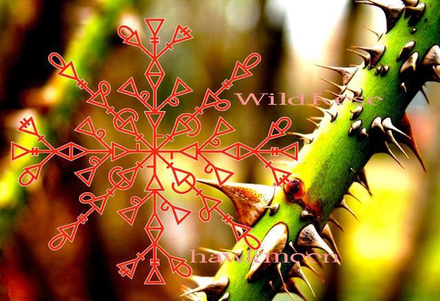 ДИКАЯ РОЗА (защита-чистка от перекладов и отводов). Автор:Hawkmoon Runes 14325006_m