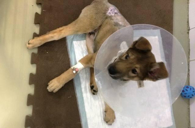 Малыш совсем щенок, сбила машина. Срочно нужна операция!!! 14951422_m