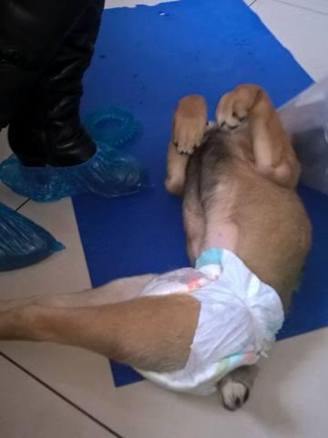 Малыш совсем щенок, сбила машина. Срочно нужна операция!!! 15008442_m
