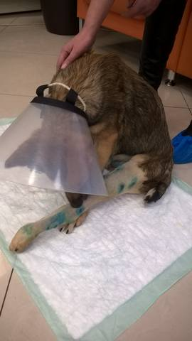 Малыш совсем щенок, сбила машина. Срочно нужна операция!!! 15455249_m