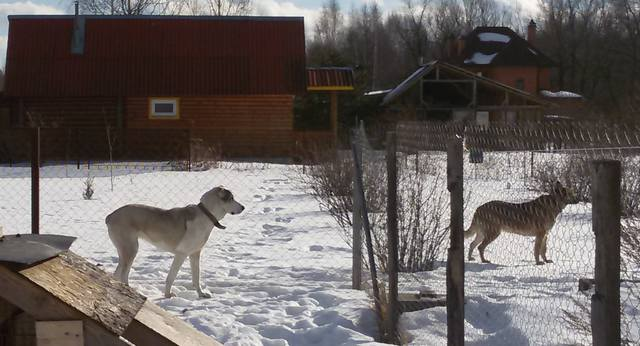 Домашние любимцы Кошки и Собаки - Страница 19 16259731_m