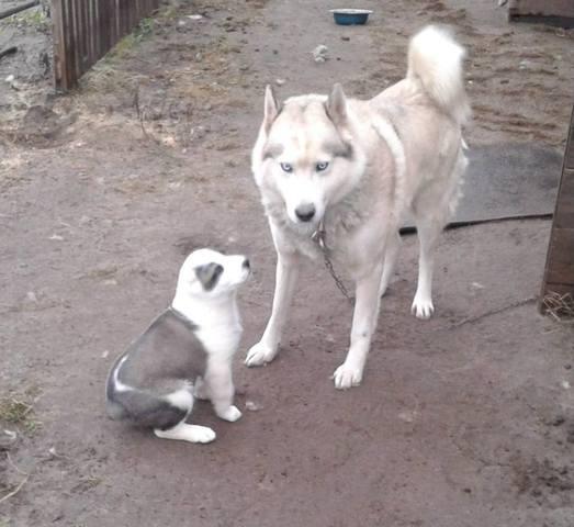 Домашние любимцы Кошки и Собаки - Страница 19 16261492_m