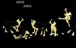 Декоративные животные - Страница 2 17077790