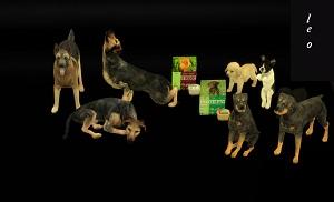 Декоративные животные - Страница 2 17077803