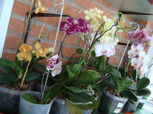 Орхидеи - Страница 16 17344788_m