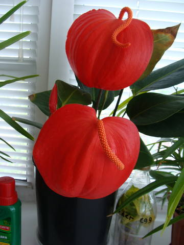 Орхидеи - Страница 16 17344792_m