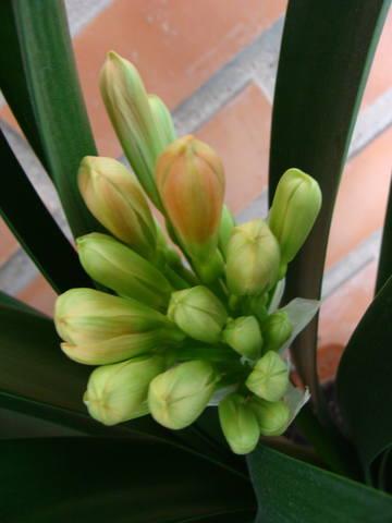 Орхидеи - Страница 16 17344795_m