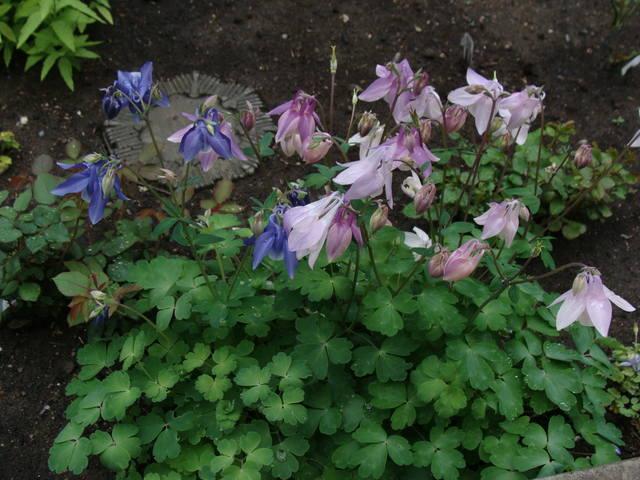 Весенне цветущие - Страница 12 17407864_m