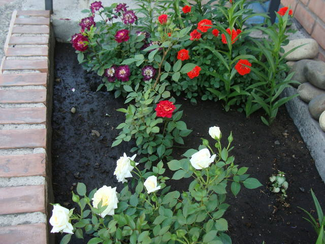 Розы цветут - Страница 39 17638961_m