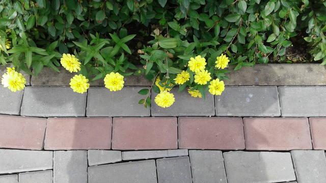 дела садовые - Страница 20 17962102_m