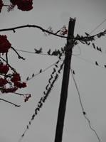 Уж небо осенью дышало.... - Страница 6 19140972_s