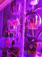 Орхидеи - Страница 16 19824162_s