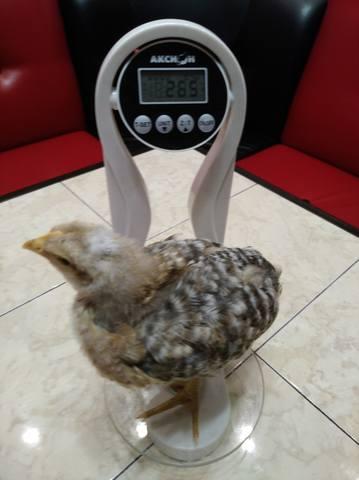 Вопросы про цыплят - Страница 6 20073720_m