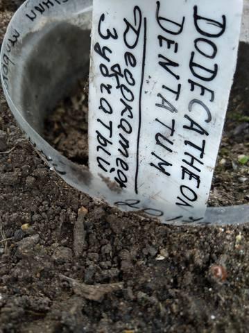 дела садовые 21747536_m