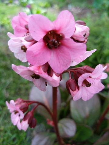 Весна идет!!! - Страница 40 21902361_m