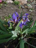 Весна идет!!! - Страница 2 21925375_s