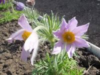 Весна идет!!! - Страница 2 21925431_s