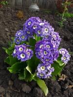Весна идет!!! - Страница 2 21925451_s