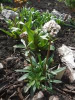Весна идет!!! - Страница 2 21925567_s