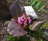 Весна идет!!! - Страница 2 21925608_s