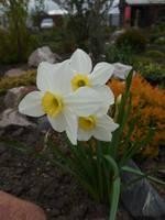 Весна идет!!! - Страница 2 21925618_s