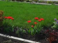 Весна идет!!! - Страница 2 21925641_s