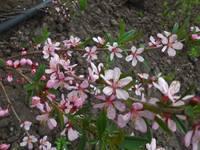 Весна идет!!! - Страница 2 21925730_s