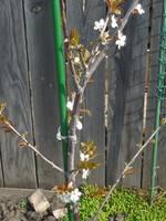 Расцветали яблони и груши... - Страница 39 21959476_s