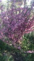 Разные кустарники - Страница 3 22021806_s