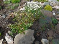Разные кустарники - Страница 3 22046068_s