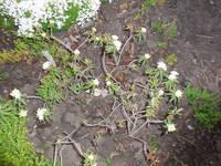 Разные кустарники - Страница 3 22046118_s