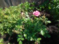 Розы цветут - Страница 13 22198647_s