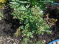 Розы цветут - Страница 13 22198699_s