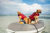 Магазин DOGS ACTIVE профессиональная амуниция для собак - Страница 5 22333603_s