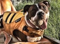 Магазин DOGS ACTIVE профессиональная амуниция для собак - Страница 4 22333606_s