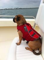 Магазин DOGS ACTIVE профессиональная амуниция для собак - Страница 4 22333653_s