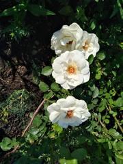 Георгины в цвету - Страница 36 22784073_m