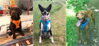 Магазин DOGS ACTIVE профессиональная амуниция для собак - Страница 4 22797551_s
